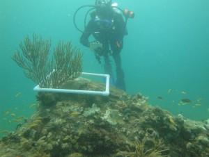 Environmental data collection biological
