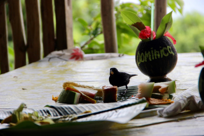 A bird on a table with a large leaf and food, next to a coconut shell drink with Dominica written on it.