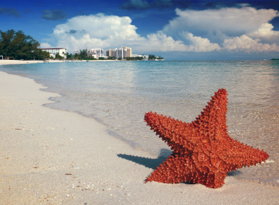 A starfish in the sand with a beach and water behind. Buildings on the horizon.