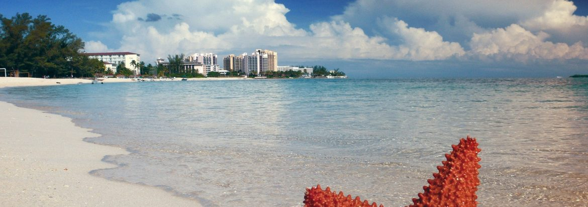 A photo of a beach with the top of a starfish sticking up at the bottom and hotels on the horizon.