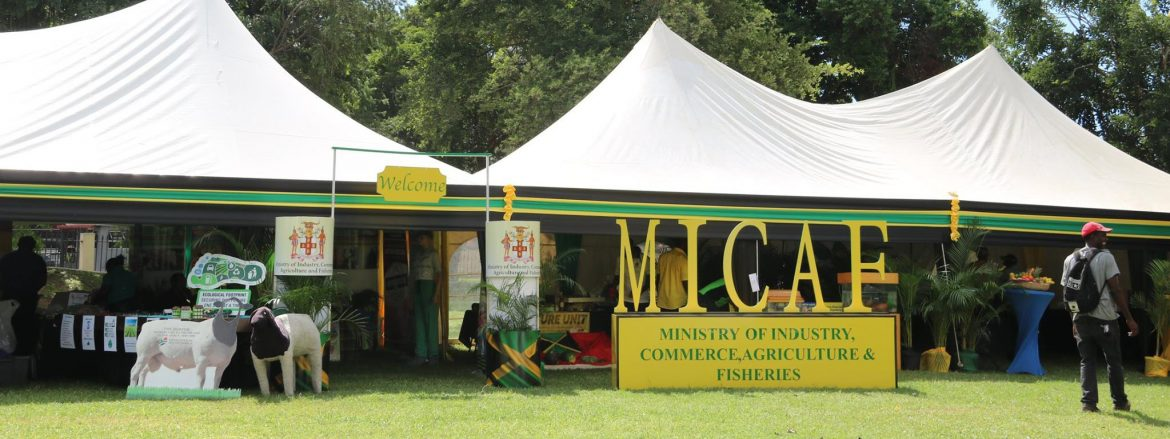 Ministry of Industry, Commerce, Agriculture and Fisheries Jamaica. MICAF even with tents set up in a field.