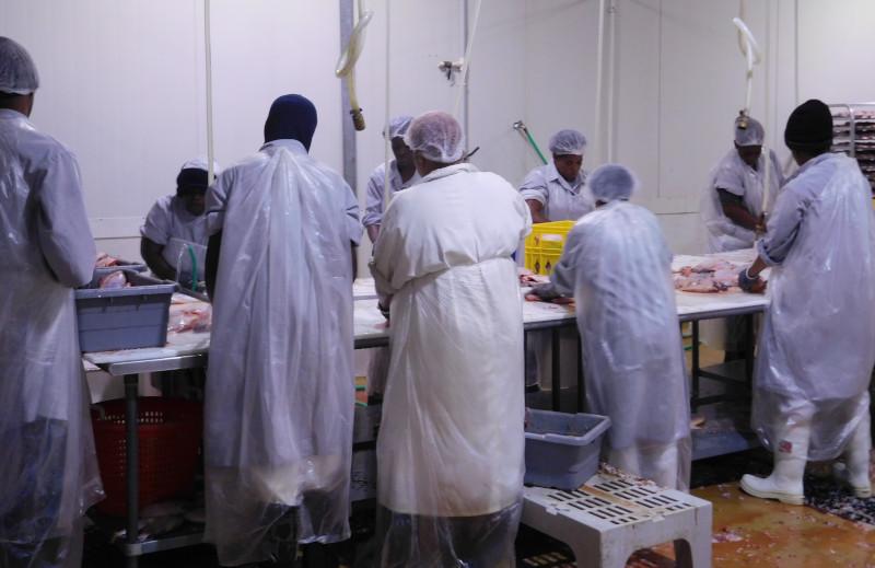 Algix Jamaica Ltd. processing floor.