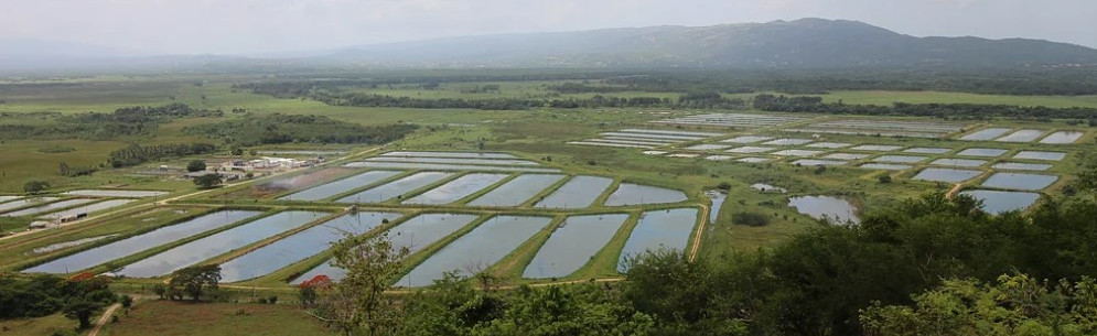 Algix Jamaica Ltd. aerial view of fish farm.