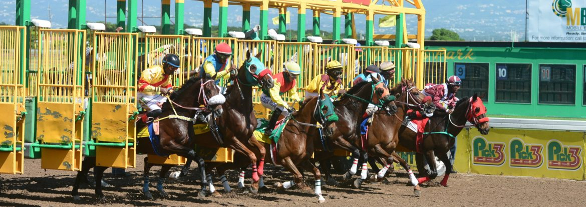 Supreme Ventures Limited horse race start at the gate